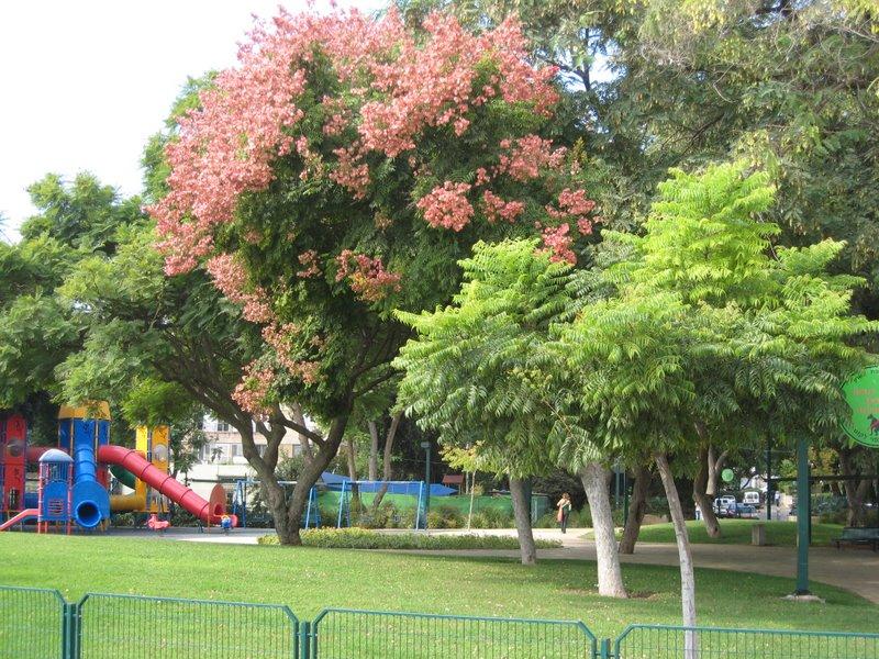 Jardin public en centre ville