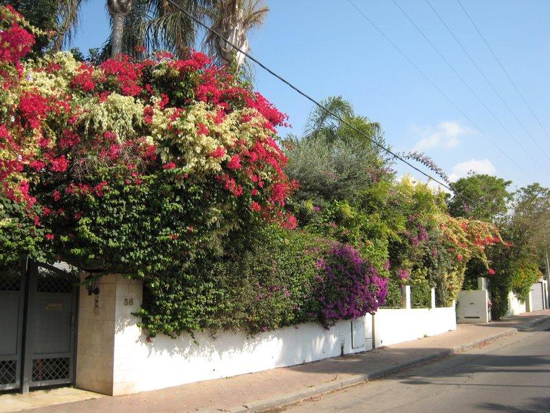 Visite Ramat Hasharon 3